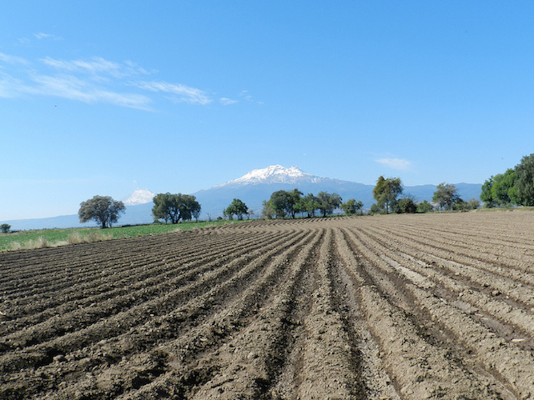 the fields of Mexico. Taken by Arcadia student Deanna Haasz