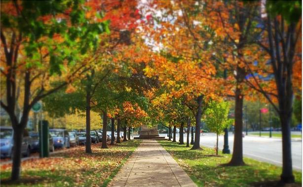 Benjamin-franklin-parkway-fall-foliage