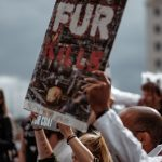Borrow or Rob? The Truth Behind Fur in Fashion